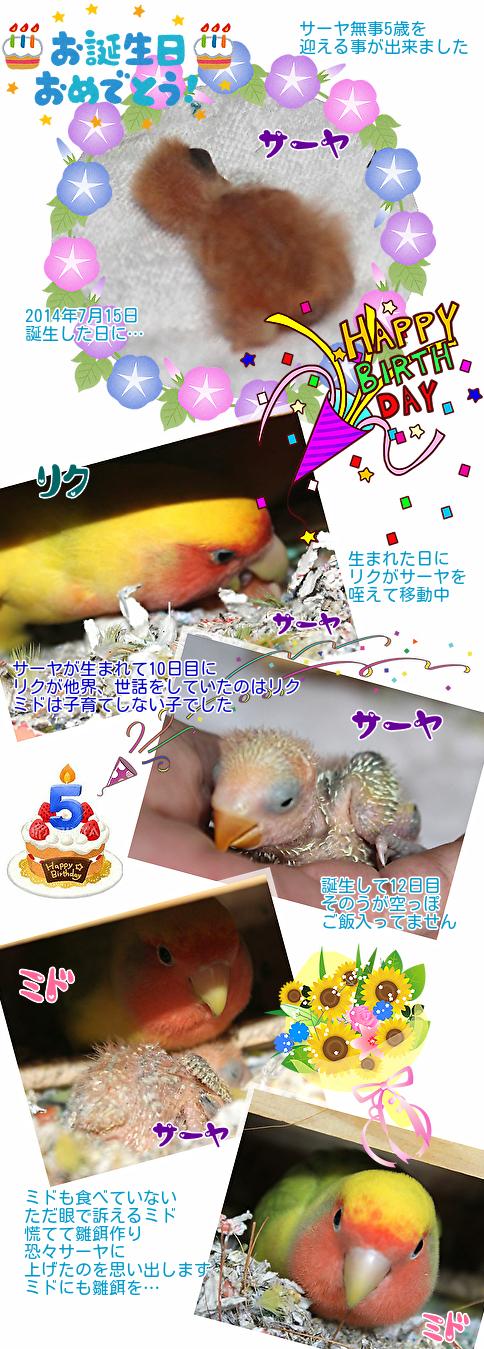 ①サーヤの誕生日