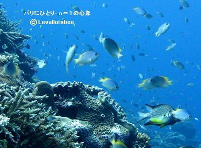魚影ゆたかなサンゴ礁REVdownsize