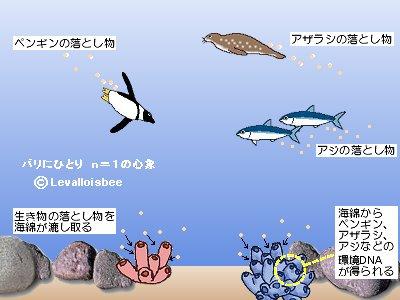 環境DNAを集める海綿REV