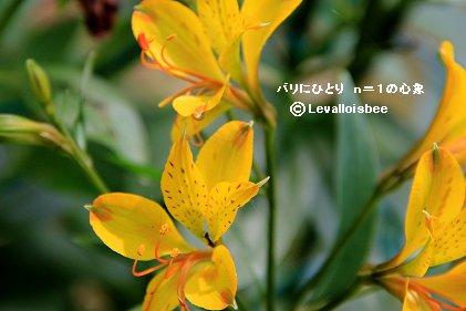 黄色い花REVdownsize