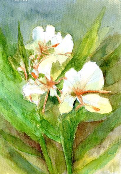 ジンジャーの花2