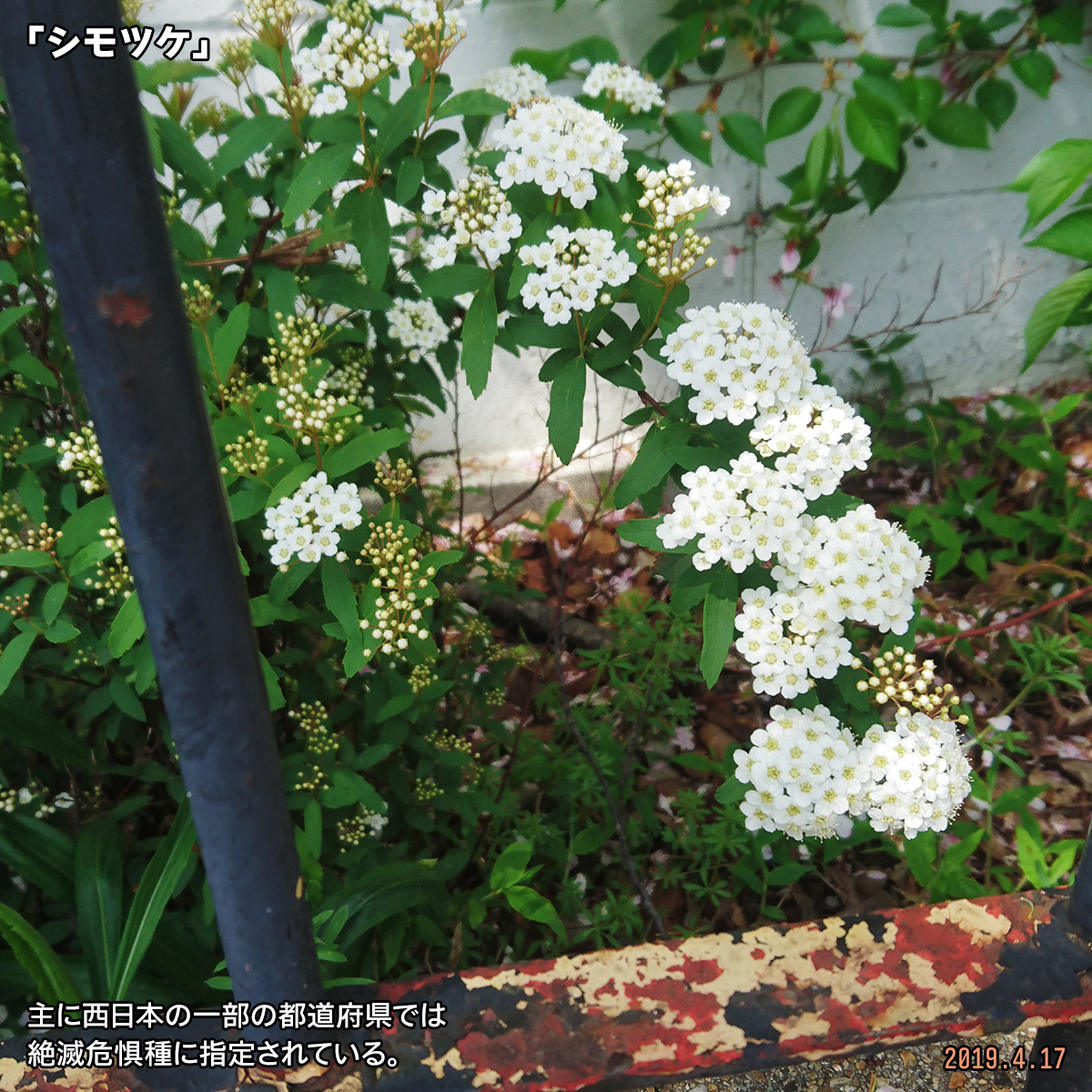DSC_0343-(1).jpg