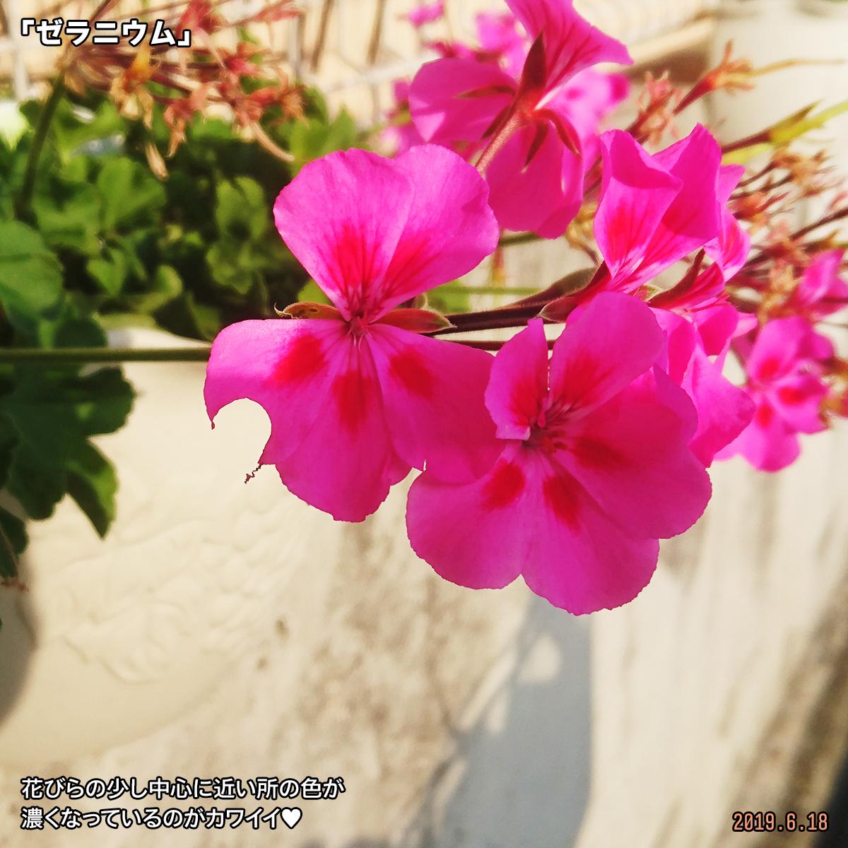 DSC_0827_20190711172311c30.jpg