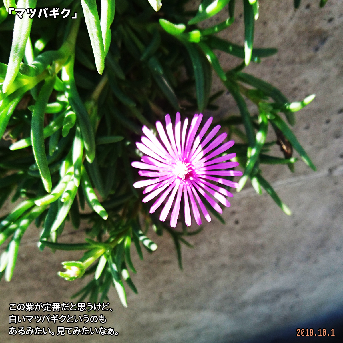 DSC_8269.jpg