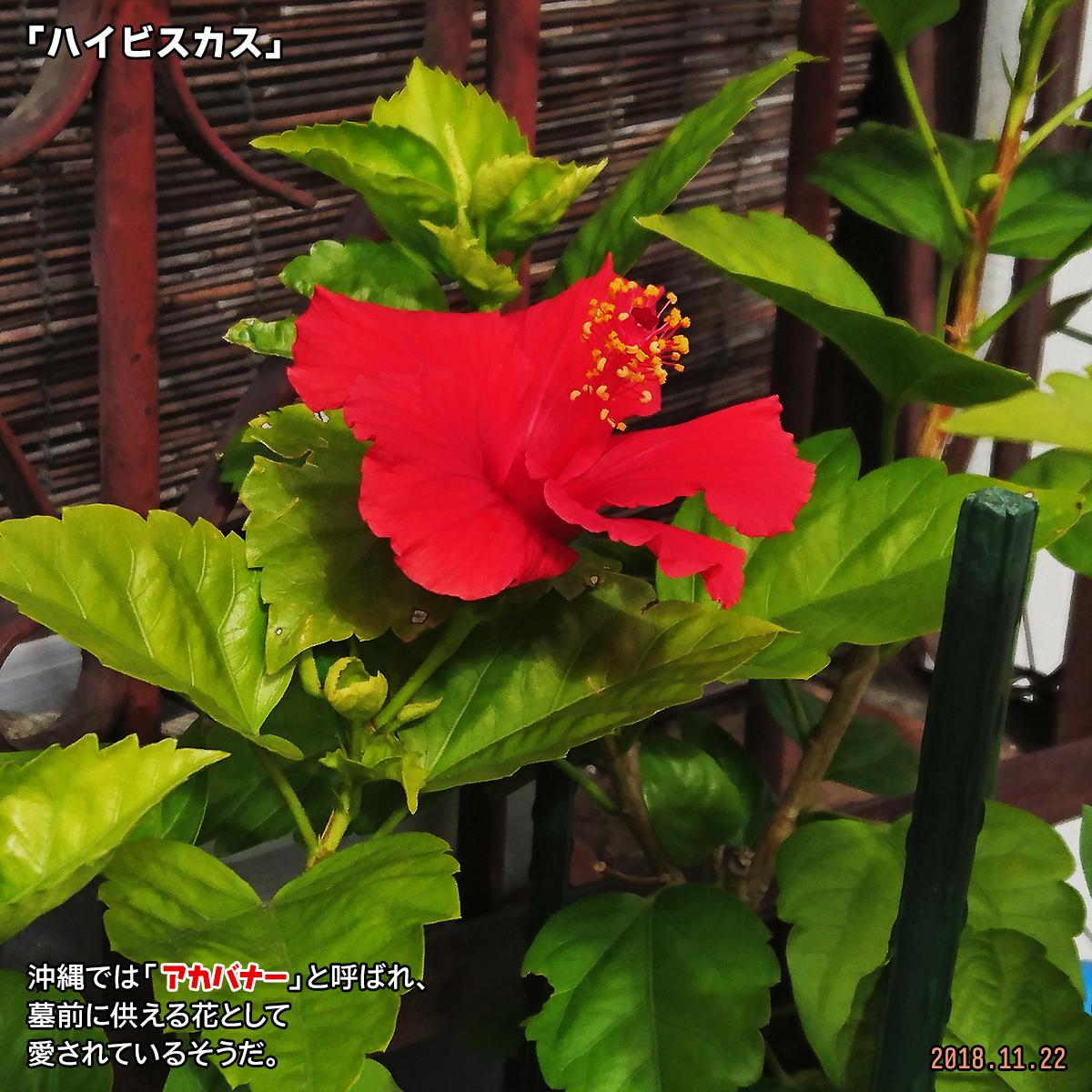 DSC_8663.jpg