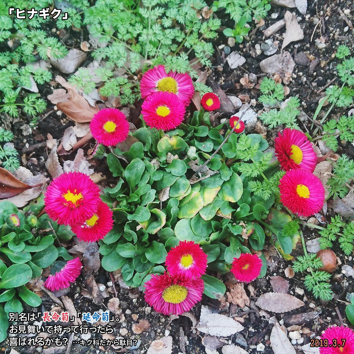 DSC_9876_20190630153804d79.jpg