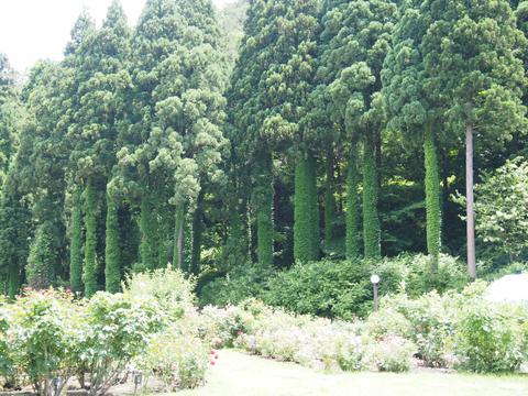 バラ公園の樹木