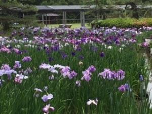 京都植物園1-10