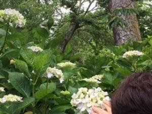 京都植物園1-12