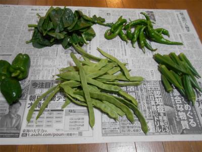 010626収穫した野菜