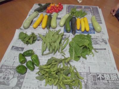 010629収穫野菜