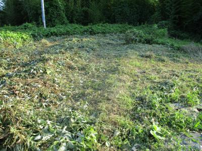 010715耕作放棄地が草刈りされてた