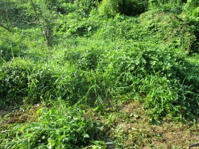 010802草刈り前