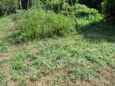 010817草刈り
