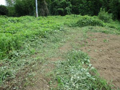 010831草刈りの成果1