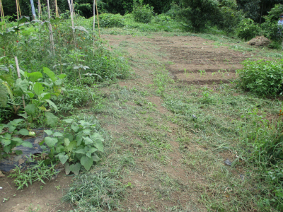010831草刈りの成果2