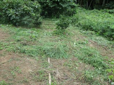 010831草刈りの成果5