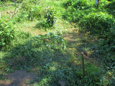 010916草刈り後1