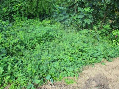 010916草刈り前2