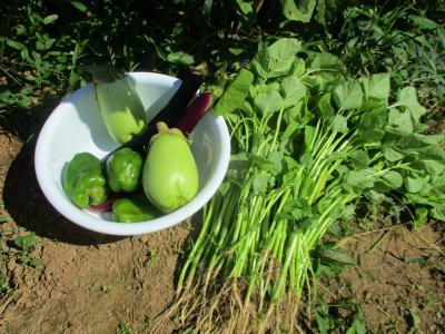 010916収穫物