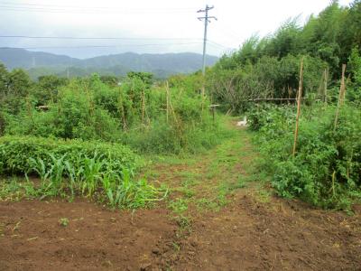 010923台風の後の空の畑