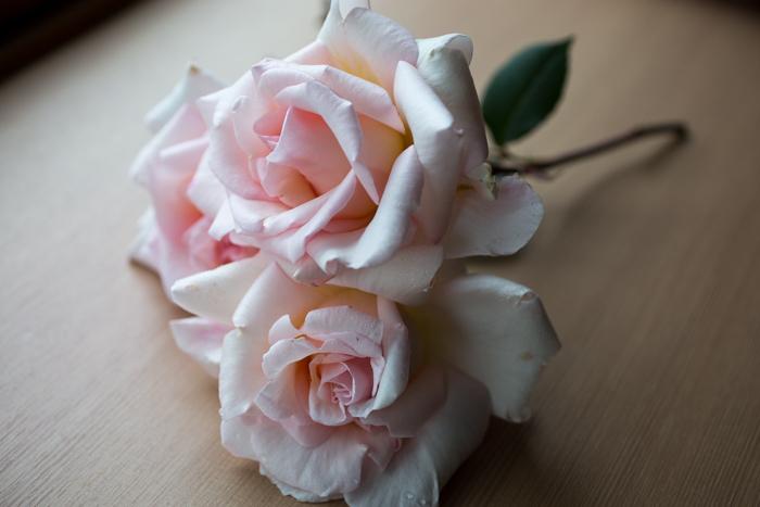 rose20190630-4013.jpg