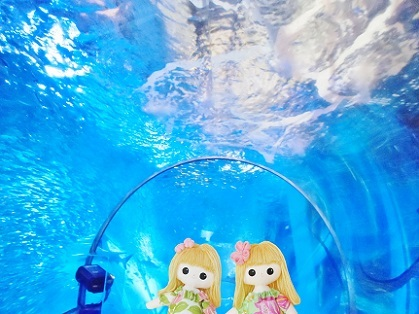 水中エスカレーター アクアチューブです