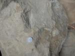 ツノガイの化石
