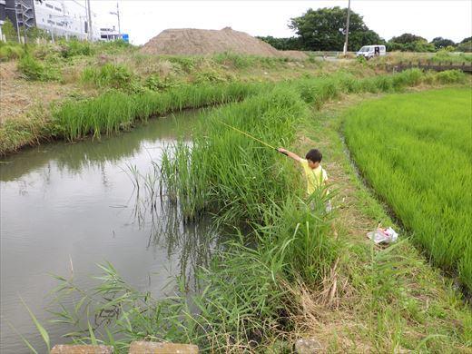 流山の田んぼ (8)