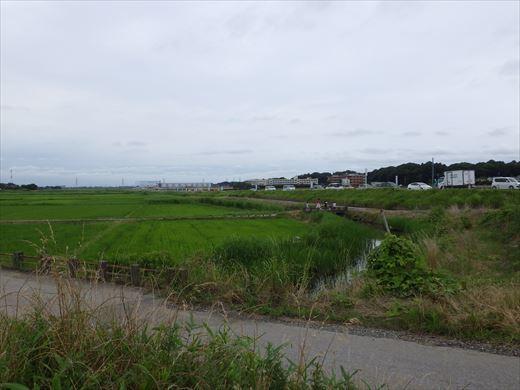 流山の田んぼ (15)