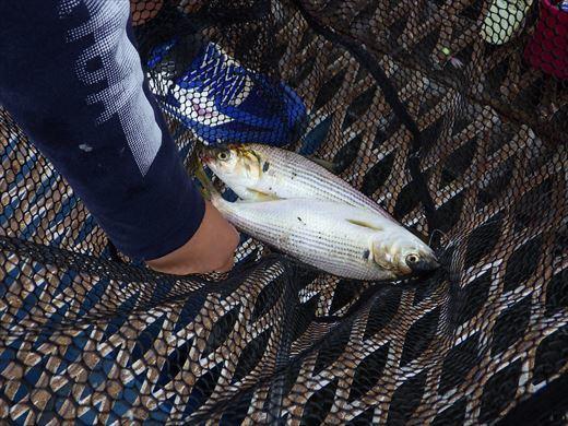 本牧釣り施設 (17)