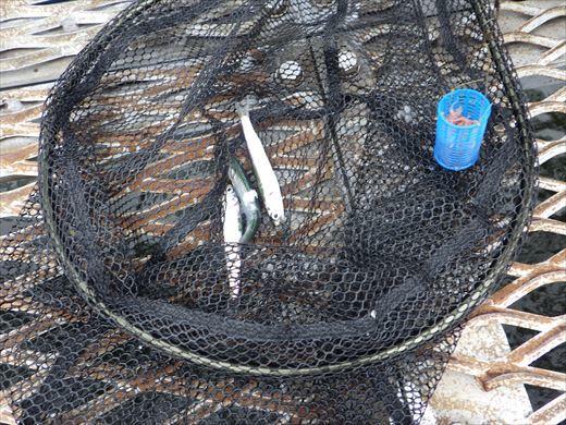 本牧釣り施設 (30)