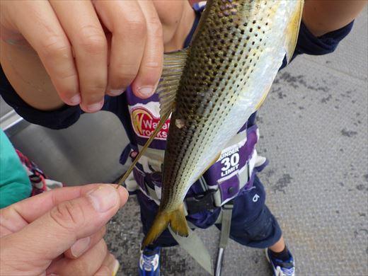 本牧釣り施設 (41)