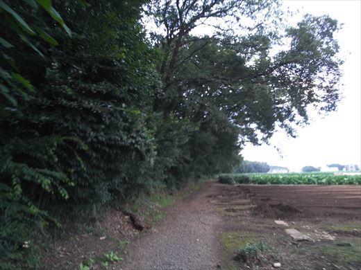 カブトムシの捕れる場所 (2)