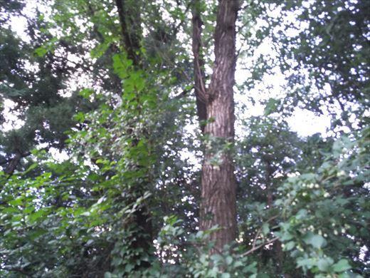 カブトムシの捕れる場所 (5)