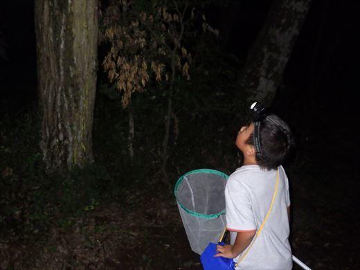 カブトムシの捕れる場所 (21)