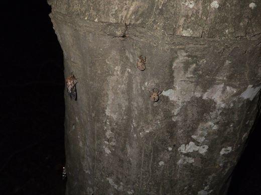 カブトムシの捕れる場所 (28)