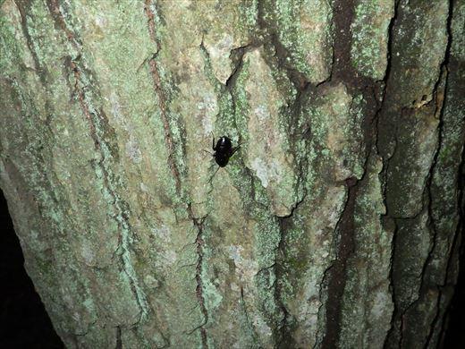 カブトムシの捕れる場所 (36)