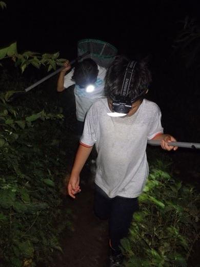 カブトムシの捕れる場所 (38)