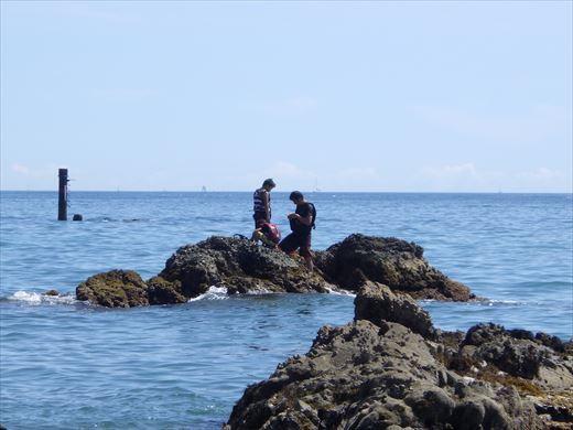三浦半島釣り (14)