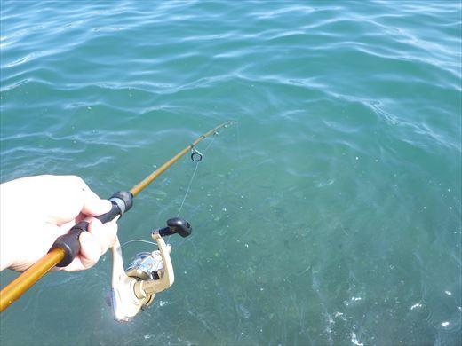 三浦半島釣り (23)