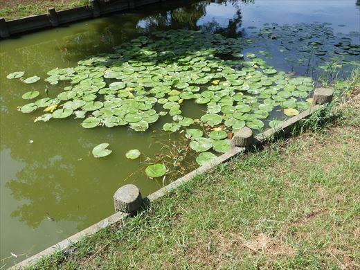 三郷公園 (14)