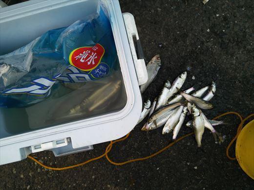 若洲海浜公園釣り (22)
