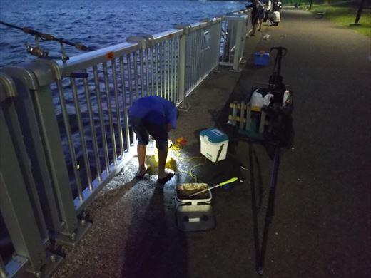 若洲海浜公園釣り (25)