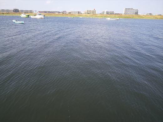 江戸川放水路でハゼ釣り? (17)
