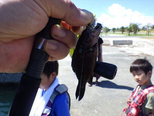 沖縄で釣って食べる! (4)