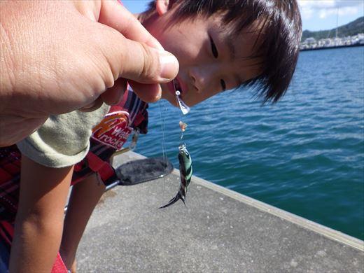 沖縄で釣って食べる! (11)