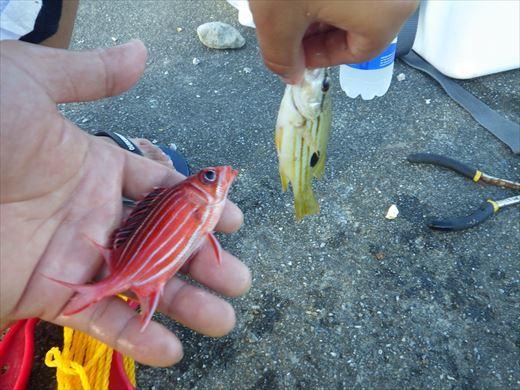 沖縄で釣って食べる! (20)