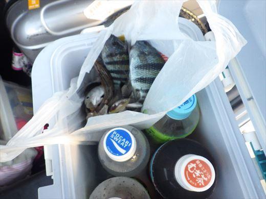 沖縄で釣って食べる! (23)