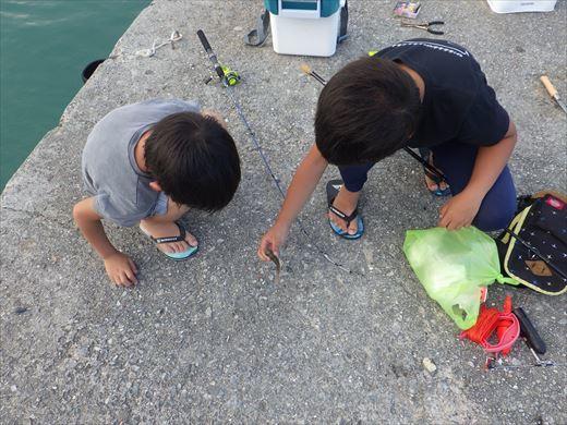 奥武島の堤防で (9)